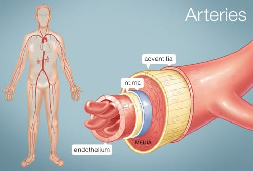 Arteries Graph